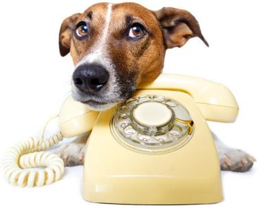 simpatico cane che vuole chiamare per consulenza