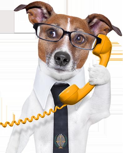 cagnolino al telefono con il legale